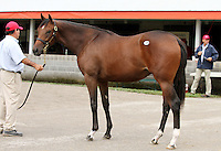 Hip #125 A.P. Indy - Miraculous Miss filly at the  Keeneland September Yearling Sale.  September 9, 2012.