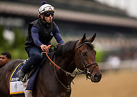 ELMONT, NY - JUNE 07: Gronkowski gets ready to gallop in preparation for the 150th Belmont Stakes at Belmont Park on June 07, 2018 in Elmont, New York. (Photo by Alex Evers/Eclipse Sportswire/Getty Images)