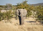 An Elephant In Elegant Pose.