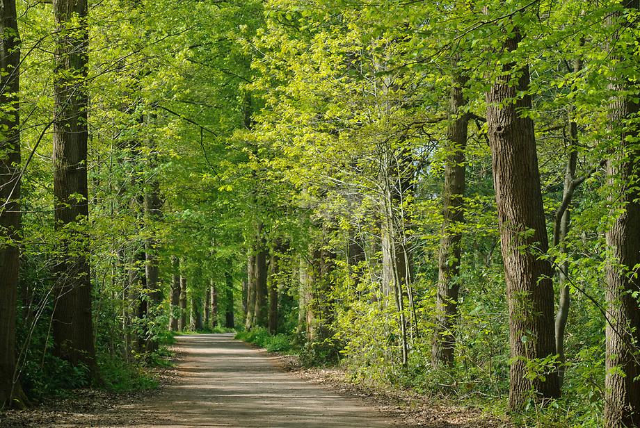 Eikenlaan, Vloeiweide - Noord-Brabant
