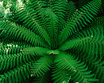 Green fern, close-up