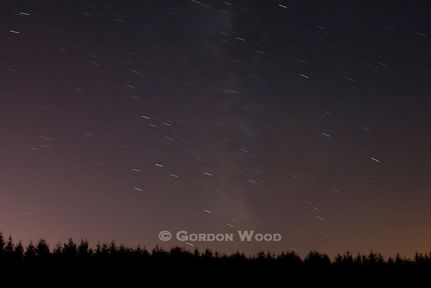 Star Trails and Aircraft Lights Over Coniferous Forest