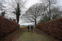 Pictured: One of the fields with coes and horses at the Trust Friday 02 December 2016<br /> The Sidney Nolan Trust, Rodd, Herefordshire, England, UK