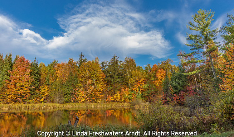 Pretty autumn colors surrounding a pond in the Chequamegon National Forest.