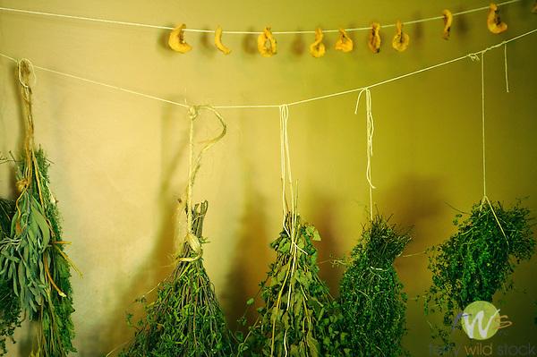 Billings Farmhouse. Herbs drying in kitchen.