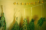 Billings Farmhouse. Herbs drying in kitchen.