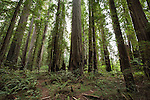 Redwoods Hiking