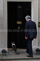 Sir Michael Fallon MP (Secretary of State for Defence) &amp; Larry (10 Downing Street cat and Chief Mouser to the Cabinet Office).<br /> <br /> London, 12/06/2017. Today, Theresa May's reshuffled Cabinet met at 10 Downing Street after the General Election of the 8 June 2017. Philip Hammond MP - not present in the photos - was confirmed as Chancellor of the Exchequer. <br /> After 5 years of the Coalition Government (Conservatives &amp; Liberal Democrats) led by the Conservative Party leader David Cameron, and one year of David Cameron's Government (Who resigned after the Brexit victory at the EU Referendum held in 2016), British people voted in the following way: the Conservative Party gained 318 seats (42.4% - 13,667,213 votes &ndash; 12 seats less than 2015), Labour Party 262 seats (40,0% - 12,874,985 votes &ndash; 30 seats more then 2015); Scottish National Party, SNP 35 seats (3,0% - 977,569 votes &ndash; 21 seats less than 2015); Liberal Democrats 12 seats (7,4% - 2,371,772 votes &ndash; 4 seats more than 2015); Democratic Unionist Party 10 seats (0,9% - 292,316 votes &ndash; 2 seats more than 2015); Sinn Fein 7 seats (0,8% - 238,915 votes &ndash; 3 seats more than 2015); Plaid Cymru 4 seats (0,5% - 164,466 votes &ndash; 1 seat more than 2015); Green Party 1 seat (1,6% - 525,371votes &ndash; Same seat of 2015); UKIP 0 seat (1.8% - 593,852 votes); others 1 seat. <br /> The definitive turn out of the election was 68.7%, 2% higher than the 2015.<br /> <br /> For more info about the election result click here: http://bbc.in/2qVyNRd &amp; http://bit.ly/2s9ob51<br /> <br /> For more info about the Cabinet Ministers click here: https://goo.gl/wmRYRd