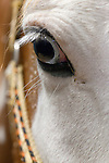 Close-up view of a horse's eye