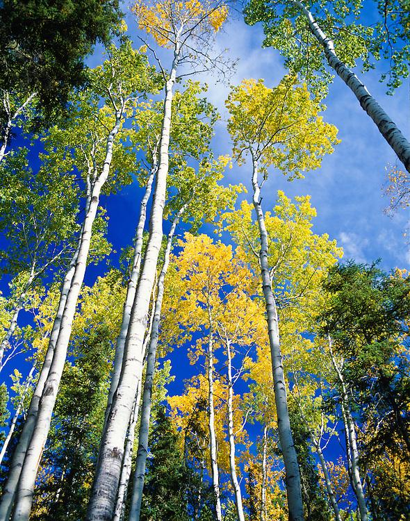 Liard Valley. BC/NWT border...Copyright Garth Lenz. Contact: lenz@islandnet.com www.garthlenz.com