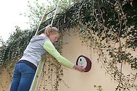 Mädchen, Kind hängt Nistkasten auf, Anbringung eines Vogel-Nistkasten an einer Hauswand, Fassade