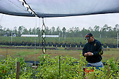 Jacksonville, Florida<br /> November 6, 2013<br /> <br /> Veteran's sustainable farm founded by Purple Heart veteran Adam Burke and managed by Afghan and Iraqi veteran Steve Ellseberry.<br /> <br /> <br /> Army veteran Steve Ellseberry picks peppers.