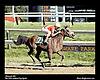 Monarch AH   .The 1991 Arabian Cup Sprint