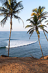 Tropical scenery of palm trees on a hillside by blue ocean, Mirissa, Sri Lanka, Asia