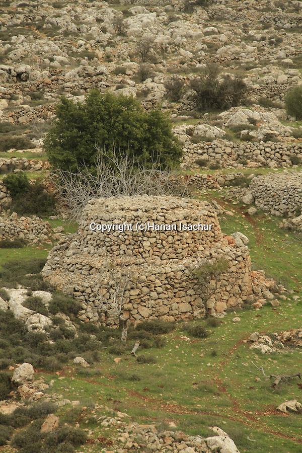 A shomera in Samaria