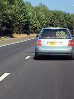 """Pictured: A picture of a young calf is seen at the back of a VW Passat estate car on the M4 motorway near Swansea, Wales, UK. 06 July 2018<br /> Re: South Wales Police are investigating after reports a cow was seen in the back of a car on a motorway.<br /> Motorists were stunned after apparently seeing the large animal in the light blue 04 reg Volkswagen Passat on Friday evening.<br /> Police officers were looking into whether any road traffic or animal welfare offences occurred.<br /> The RSPCA said it was """"extremely concerned"""" about the images.<br /> One image shows the car going past junction 42 of the eastbound carriageway.<br /> An RSPCA spokeswoman said: """"This is a completely unacceptable way to transport a large, farm animal.<br /> Penalties for overloading a car include fines of up to £300 as well as three penalty points."""