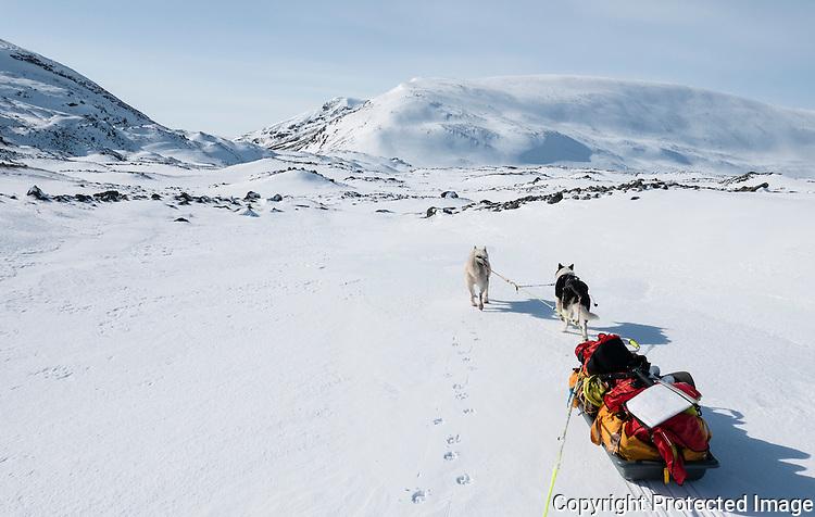 Grønlandshunder trekker pulk mot Bjørnskardet på Varangerhalvøya. ---- Dogs pulling sled towards Bjørnskardet on Varangerhalvøya.