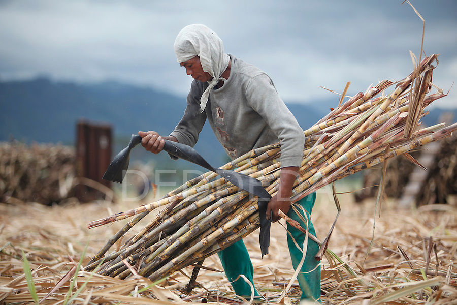 A man harvests sugar cane near Bias City on Negros, Philippines.