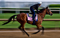 LOUISVILLE, KENTUCKY - MAY 01: Abel Tasman, owned by Clearsky Farms and trained by Bob Baffert, exercises in preparation for the Kentucky Oaksduring Kentucky Derby and Oaks preparations at Churchill Downs on May 1, 2017 in Louisville, Kentucky. (Photo by Scott Serio/Eclipse Sportswire/Getty Images)