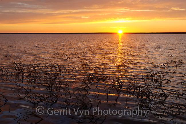 Tundra lake and Arctophila fulva south of Teshekpuk Lake at sunset. Arctic Coastal Plain Alaska. July.