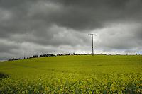 Electric wooden power poles in field of oilseed rape against grey moody sky. Aschaffenburg area, Germany