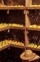 Europe/France/Centre/45/Loiret/Sologne/La Ferté-Saint-Aubin : Le château en briques et chaînages de pierre (XVII° siècle) - Le cellier qui ser t de garde-manger pour les fruits,pommes du domaine.