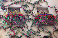Window with climbing flowers.