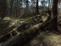 FOREST_LOCATION_90204