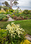 Indianola, WA: Summer perennial garden overlooking Puget Sound