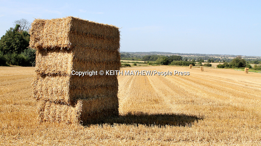 Bedfordshire, UK - Square bales of hay are piled up in the fields around the outskirts of Bedford as the last of the harvest is collected in - 15th September 2012..Photo by Keith Mayhew