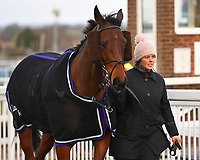 Trainer Laura Morgan with Skipping On in the Parade Ring prior to The Crystal Services Commercial and Domestic Cleaning Chase during Horse Racing at Plumpton Racecourse on 10th February 2020