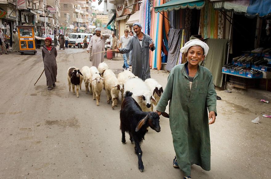 Egypte, Belbeis, 8 mei 2007..Belbeis stadsbeelden. Jongetje met schapen onderweg. Houdt voorste schaap vast bij z'n oor..Winkeltjes en markthandel, werken op straat.armoede, 3e wereld, derde wereld.Foto (c) Michiel Wijnbergh