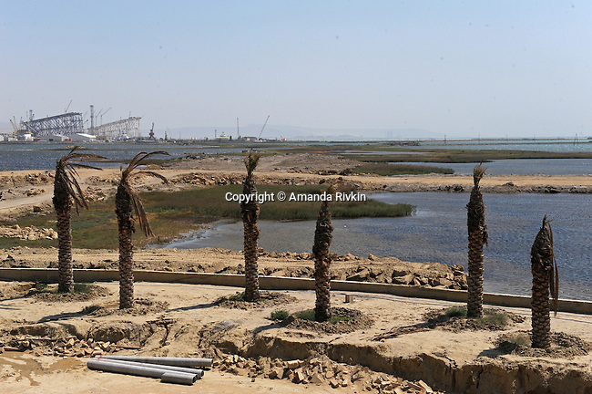 Dying palm trees are seen on site of the Khazar Islands project near Sahil, Azerbaijan on July 18, 2012.  The brainchild of Ibrahim Ibrahimov, an Azerbaijani oligarch and billionaire, the artificial Khazar Islands project just southwest of the Azerbaijani capital Baku is being built at a projected cost of $100 billion with an anticipated 800,000 housing units.