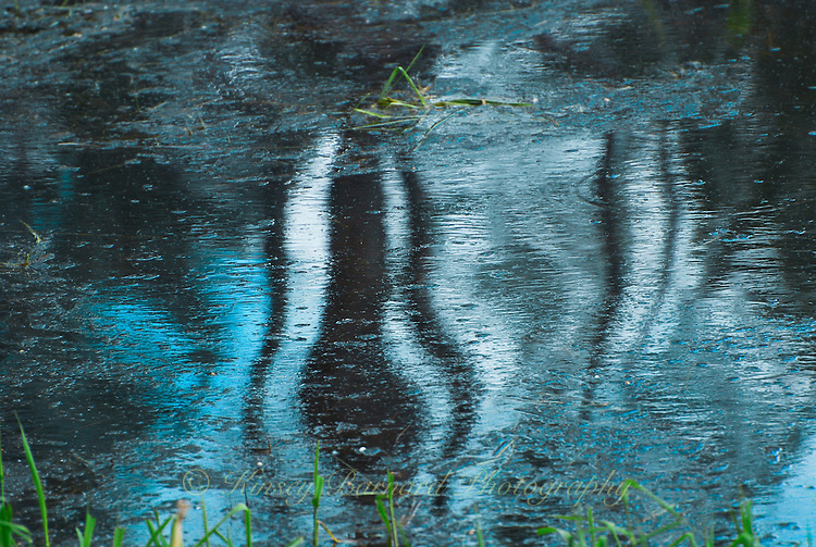 &quot;TOOLEY BLUE SKUNK&quot;<br />