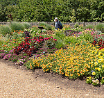 Royal Horticultural Society gardens at Hyde Hall, Essex, England, UK - Annual Bedding