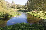The Salisbury River Avon, meandering at Figheldean, Wiltshire, England, UK