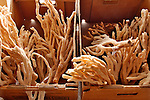Long finger sponges for sale in Tarpon Springs, Florida a town which has the highest percentage of Greek Americans in any US city and which is known for sea sponges