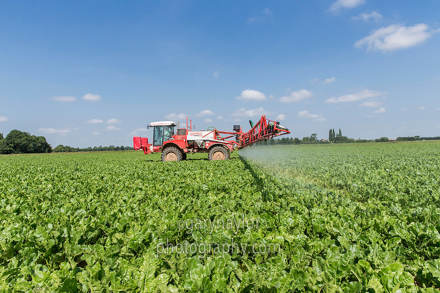 Spraying insecticide onto sugar beet using a Bateman 3000 - Lincolnshire, June