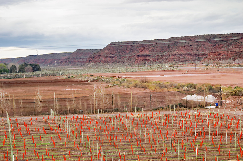 View of the vineyards and the mountain showing the red soil that has given the name to the winery. Bodega Del Anelo Winery, also called Finca Roja, Anelo Region, Neuquen, Patagonia, Argentina, South America