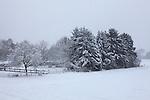 Europa, DEU, Deutschland, Nordrhein Westfalen, NRW, Rheinland, Niederrhein, Toenisberg, Winter, Schnee, Baeume, Kategorien und Themen, Natur, Umwelt, Landschaft, Jahreszeiten, Stimmungen, Landschaftsfotografie, Landschaften, Landschaftsphoto, Landschaftsphotographie, Wetter, Wetterelemente, Wetterlage, Wetterkunde, Witterung, Witterungsbedingungen, Wettererscheinungen, Meteorologie, Wettervorhersage....[Fuer die Nutzung gelten die jeweils gueltigen Allgemeinen Liefer-und Geschaeftsbedingungen. Nutzung nur gegen Verwendungsmeldung und Nachweis. Download der AGB unter http://www.image-box.com oder werden auf Anfrage zugesendet. Freigabe ist vorher erforderlich. Jede Nutzung des Fotos ist honorarpflichtig gemaess derzeit gueltiger MFM Liste - Kontakt, Uwe Schmid-Fotografie, Duisburg, Tel. (+49).2065.677997, ..archiv@image-box.com, www.image-box.com]