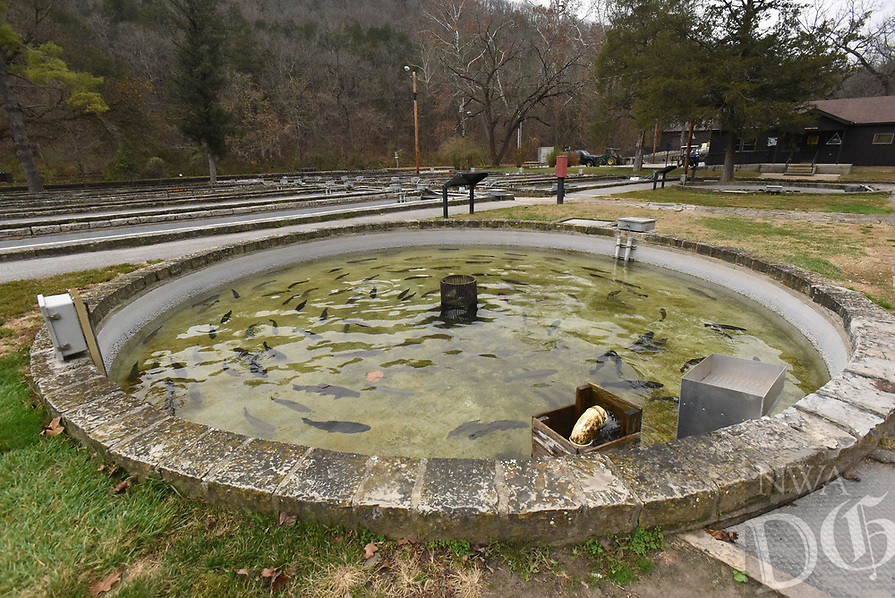 NWA Democrat-Gazette/FLIP PUTTHOFF<br />Trout swim in a tank      Nov. 17 2017     at the trout hatchery at Roaring River State Park. Visitors are welcome to tour the hatchery, operated by the Missouri Conservation Department.