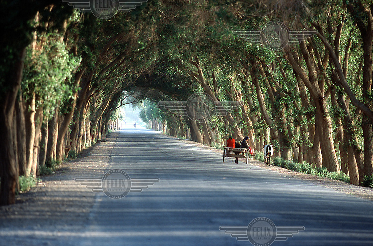 A donkey cart carries its passengers along a tree-lined road in a small oasis in the middle of the Taklamakan desert near Hetian.