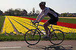 Man cycling near Keukenhof Gardens, Lisse, Netherlands .  John offers private photo tours in Denver, Boulder and throughout Colorado, USA.  Year-round. .  John offers private photo tours in Denver, Boulder and throughout Colorado. Year-round.