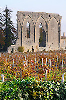 Vineyard. Ruin of a church. Chateau Les Grandes Murailles, Saint Emilion, Bordeaux, France