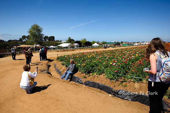 Woman using iPhone to take picture of husband in front of flower fields
