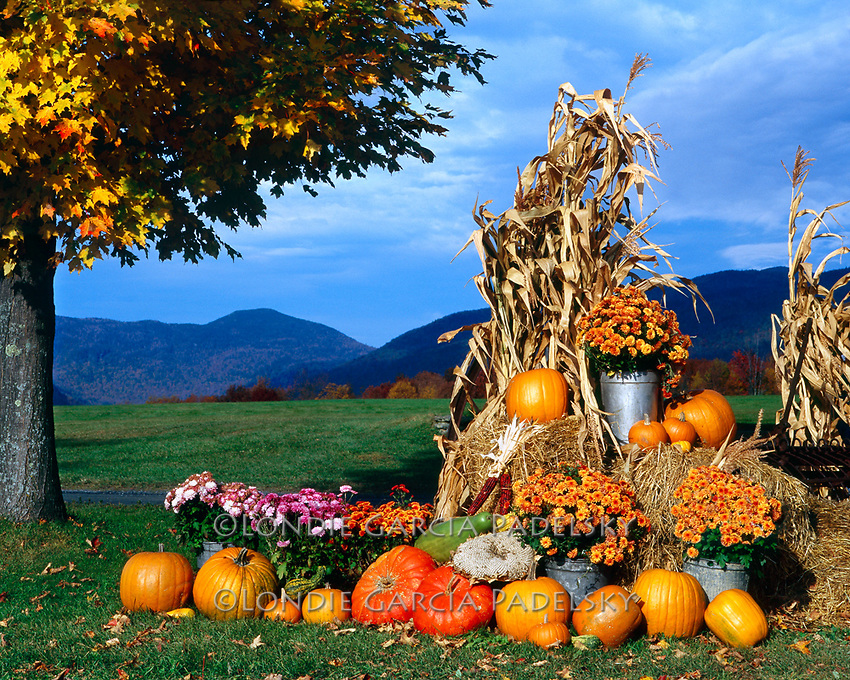 Pumpkins, flowers, and corn stalks. Decorations for the autumn holidays at Stowe, Vermont