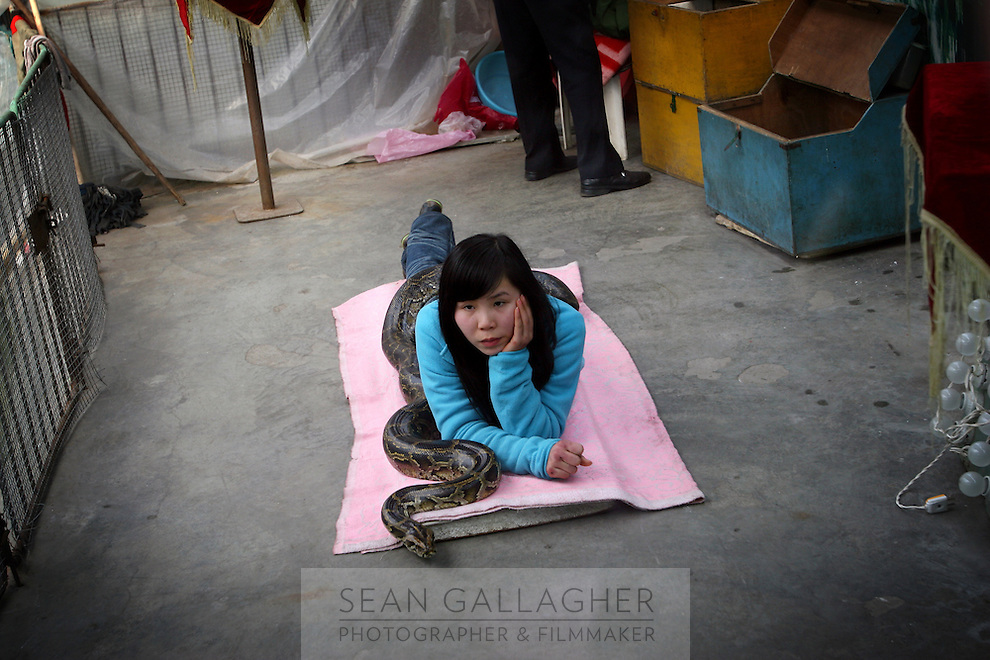 CHINA. Hubei Province. Wuhan. A woman 'performs' with a snake in Wuhan zoo. In many of China's 'second-tier' cities, away from the modern zoos in the megacities of Beijing and Shanghai, hide a plethora of smaller unknown zoos. In these zoos, what can only be described as animal abuse is subtly taking place in the form of deprivation of light, space, sanitation and social contact with other animals. Living in awful conditions, these animals spend there days entertaining tourists who seem oblivious to the animals' plight and squalid existence. 2008.