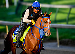 LOUISVILLE, KENTUCKY - APRIL 27: By My Standards, trained by W. Calhoun, exercises in preparation for the Kentucky Derby at Churchill Downs in Louisville, Kentucky on April 27, 2019. John Voorhees/Eclipse Sportswire/CSM