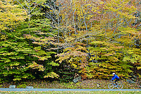 Man riding a bike through Acadia NP, Maine, ME