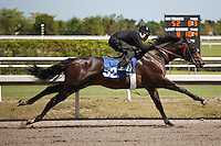 #52.Fasig-Tipton Florida Sale,Under Tack Show. Palm Meadows Florida 03-23-2012 Arron Haggart/Eclipse Sportswire.